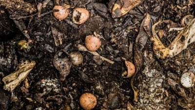Worm Composting Class