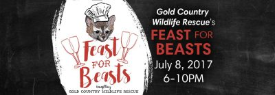 Feast for Beasts