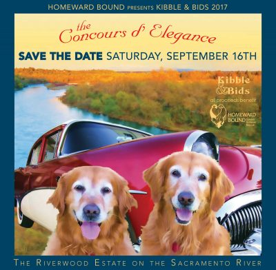 Kibble and Bids 2017: The Concours d' Elegance