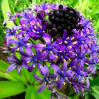 UCCE Master Gardeners Fall Plant Sale