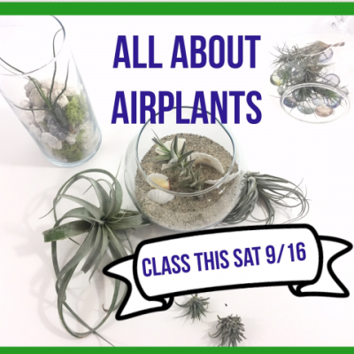 All About Airplants: Relles Florist