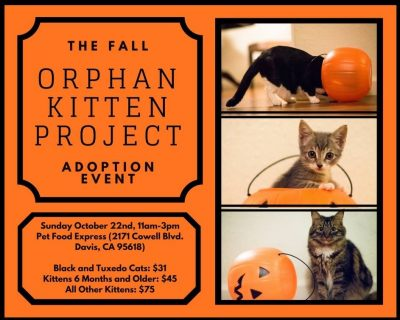 The Fall Orphan Kitten Project: Adoption Event