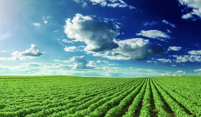 Food for Thought: The Future of Farming