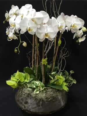 Holiday Orchid Workshop