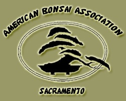 American Bonsai Association of Sacramento