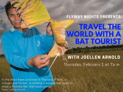 Travel the World with a Bat Tourist