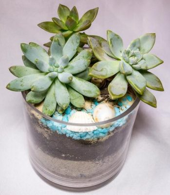 Succulents at the Beach Plant Nite