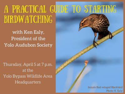 A Practical Guide to Starting Birdwatching