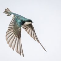 For the Birds: Art Exhibition at The Artery