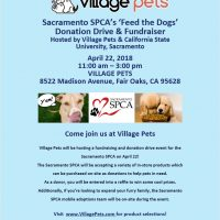 SPCA Village Pet's Feed the Dogs