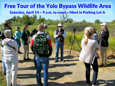Free Tour of the Yolo Bypass Wildlife Area
