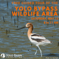 Public Tour of the Yolo Bypass Wildlife Area