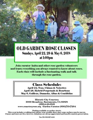 Old Garden Roses Talk and Tour