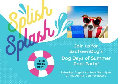 Dogs of Summer Pool Party