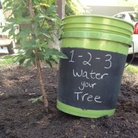 Waterwise Tree Care Workshop