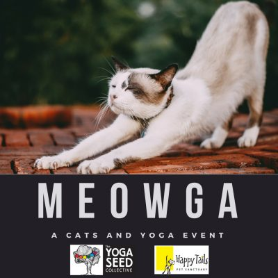Meow-ga: A Cats and Yoga Event