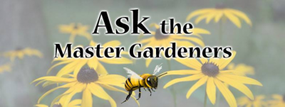 Ask the Master Gardeners at Secret Garden Nursery