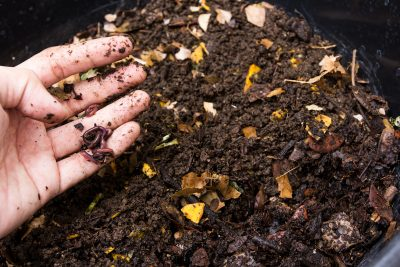 Composting with Worms Workshop