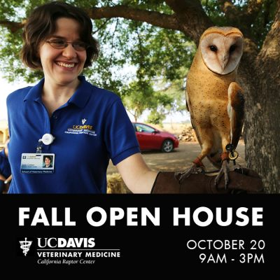 California Raptor Center Fall Open House