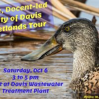 City of Davis Wetlands Tours
