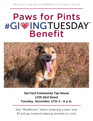 Paws for Pints Giving Tuesday Benefit