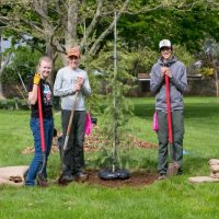 Tree Planting in Lincoln Village