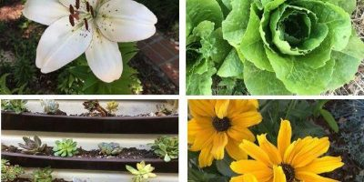 Colonial Heights Charming Garden Tour