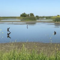 Flyway Nights: A Key Link in the State's Water and Flood Picture