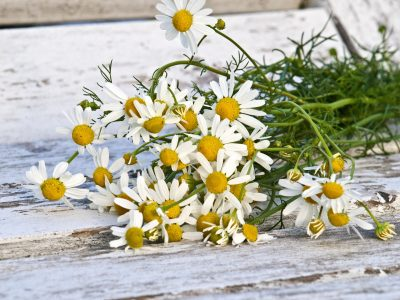Herbs and Self Care for Stress Management