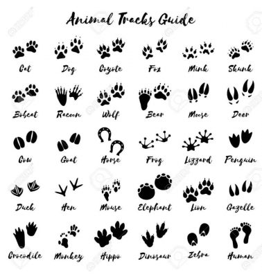 Animal Signs at the Koobs Nature Area
