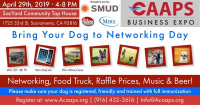 Bring Your Dog to Networking Day