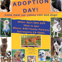 Adoption Day at Cosumnes River College