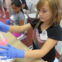 Science Summer Camp: Whodunit?