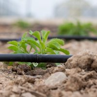 Digging into Drip Irrigation Workshop