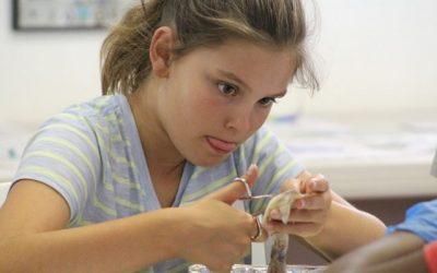 Family Workshop: Dissection Discovery