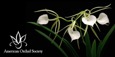 20/20 Vision of Orchids Show and Sale (Postponed)