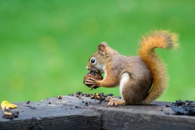 Wildlife Care Association Nuts and Berries Fundraiser