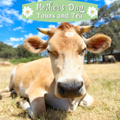 Animal Place's Mother's Day Tour and Tea