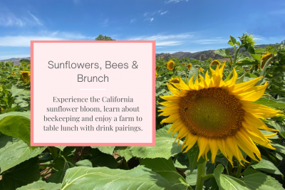 Sunflowers, Bees and Brunch Tour
